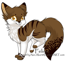 cat adopt-closed- by gold-adopts