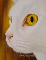 Pastel drawing Cat Guus by mo62