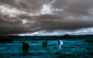Wild Welsh Ponies 7 by welshdragon