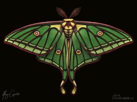 Spanish Moon Moth by MaryCapaldi