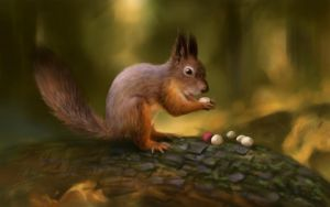 squirrel by shule1987
