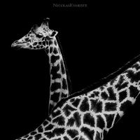 Giraffa - In Love II by NicolasEvariste