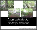 tree hanging over water pack by AzurylipfesStock