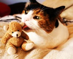 The love only a cat and Teddy can understand... by Sydney0007