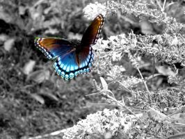 Butterfly by jmhamilton