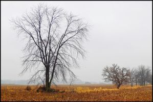 Winter trees, color, L1010364 by harrietsfriend