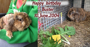 Happy birthday Buster by mirry92