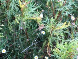 Spider in web series one 04 by teletran