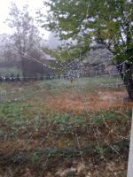 Spider Web. by In-Via