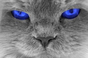 bLuE eYeS by japatoc