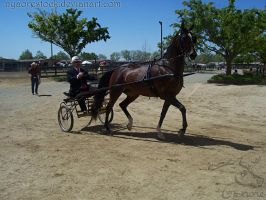 Rancho Murieta 08 - Driving 01 by Nyaorestock