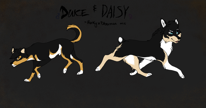 Duke and Daisy by CL0AKER