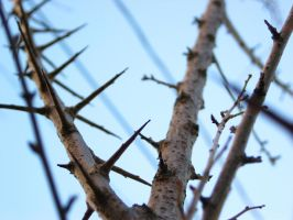 STOCK-branches 1 by CDS-stock