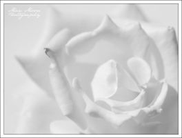 White Purity by MTC001