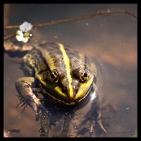 The Frog Prince by XanaduPhotography