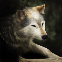 The Lone Wolf by KhanasGhost