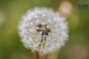 Macro Photography by InFrameStudios