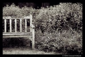 Old Bench by dspittard
