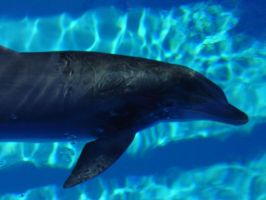 Dolphin at the Mirage by Heza-chan