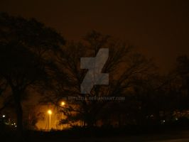 Silhouettes of Trees by Mitszell
