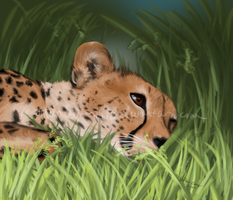 Cheetah by thunderjam1992
