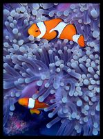 Nemo by Biggles84