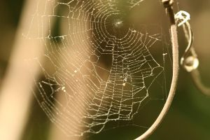 spider web stock 2 by hyannah77-stock
