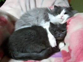 my lovely cats by NISSHIE