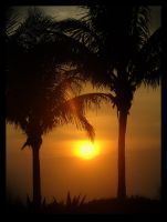 Through the Palms by tominabox1