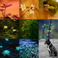 The Colours of the World by nataliebeth