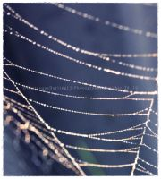 .web of pearls. by GrotesqueDarling13