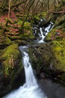 Mawddach Waterfall walk 2 by CharmingPhotography