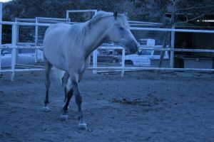 weird palomino stock by xbr0kendevotion