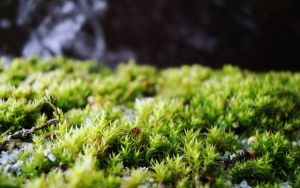 moss by rayxearl