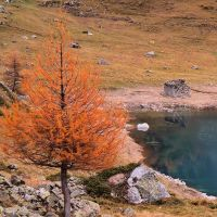 Tree lake ruin by bellaricca