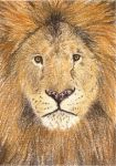 Day 20: Barbary Lion ACEO by whitetippedwaves