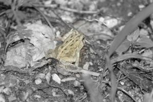 Toad two by magicia