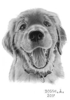 A happy dog by Torsk1