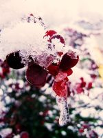 Frozen Drop. by HammettLady