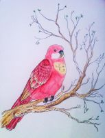 Birdy - Rosella Coloured by OzzyBlu