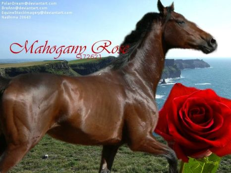 Mahogany Rose by Cowgirl90