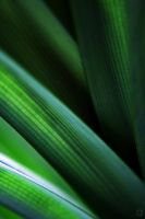 Macro On Leaf by josgoh