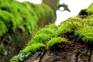 The Moss grows... by ravenandwren