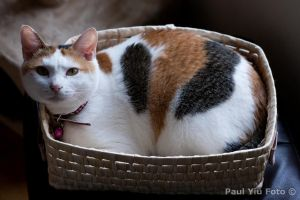 Cat In a Basket by Azyiu