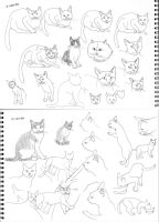April2013 Cats 01 by mayuzane