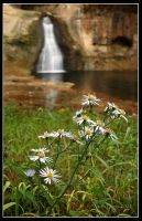 Flowers and Falls by MariusStormcrow