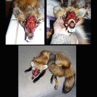 Skullfox (almost done!) by Tricksters-Taxidermy