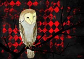 owl by Aillita