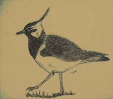 Lapwing - gift by mrs-voorhees09