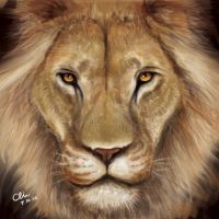 African Lion by BlackMonkey-Chi